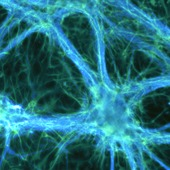 "<div><div style=""float:left;padding-left:5px;width:70%""><span class=heading><b>Healthy Communication</b> by Graham Robertson (Biomedical Engineering)</span><br />These brain cells are a mixture of neurons (in blue) and astrocytes (in green) which are the most common cells found in the brain. There is much still unknown about how these cells signal each other, especially during diseases such as Alzheimer's disease. Here we grow these cells in isolated networks to learn more about how they communicate and to discover what changes during disease conditions. <br /><span class=small>Image: © 2014 Graham Robertson</span>.  <span class=small>Collaborators: Dr Michele Zagnoni (Supervisor), Dr Trevor Bushell (Supervisor)</span></div><div style=""float:right;padding-right:5px;""><iframe width=""100%"" height=""166"" scrolling=""no"" frameborder=""no"" src=""https://w.soundcloud.com/player/?url=https%3A//api.soundcloud.com/tracks/146887774&color=ff5500&auto_play=false&hide_related=false&show_artwork=true""></iframe></div></div>"