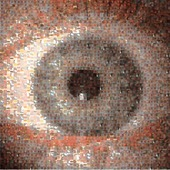<span class=heading><b>Seeing the bigger picture</b> by Matteo Menolotto</span><br />This mosaic of the front of the eye is made from images of the back of the eye, demonstrating the vast visual field of ophthalmology and the many images required to assess eye health. As such, we created an open access Comprehensive Ophthalmic Research Database (CORD) in collaboration with NHS Forth Valley, aiming to boost the development of automatic and semi-automatic diagnostic solutions for eye health worldwide.<br /><span class=small>Image: © 2019 Matteo Menolotto</span>. <span class=small>Collaborators: Kirsty Jordan, Iain Livingstone (NHS consultant ophthalmologist), Kenneth Gilmour (NHS trainee ophthalmologist), Ian Coghill, Mario Giardini (supervisor) </span>