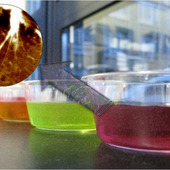 <span class=heading><b>The Science of Jelly</b> by Joy Leckie (Chemical & Process Engineering)</span><br />Natural gel-like materials are important in many industries, ranging from food, cosmetic and health applications. The most obvious example of a natural gel is jelly. The properties of jelly arise from dense fibrous networks of complex proteins which trap the surrounding water. The inside of the cell is another natural gel-like material with similar protein fibre networks. We have developed a range of simple gels, inspired by biological gels using much simpler molecules. The simple molecules interact to form fibrous gels, by a process called self-assembly. The biomimetic gels can help towards understanding natural self-assembling systems for future research. <br /><span class=small>Image: &copy; 2013 Joy Leckie</span>. &nbsp;<span class=small>Research by Joy Leckie from Chemical & Process Engineering in collaboration with Mark Haw and Rein Ulijn</span>